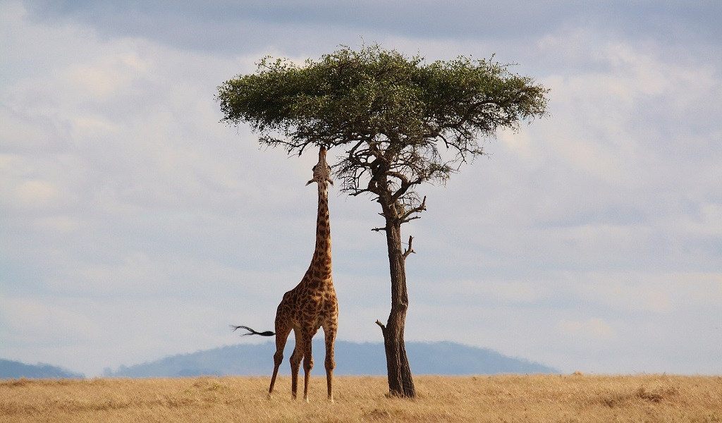 What to know before traveling to Kenya